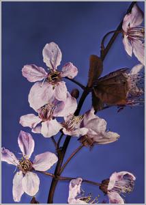 Blüten-250320.jpg